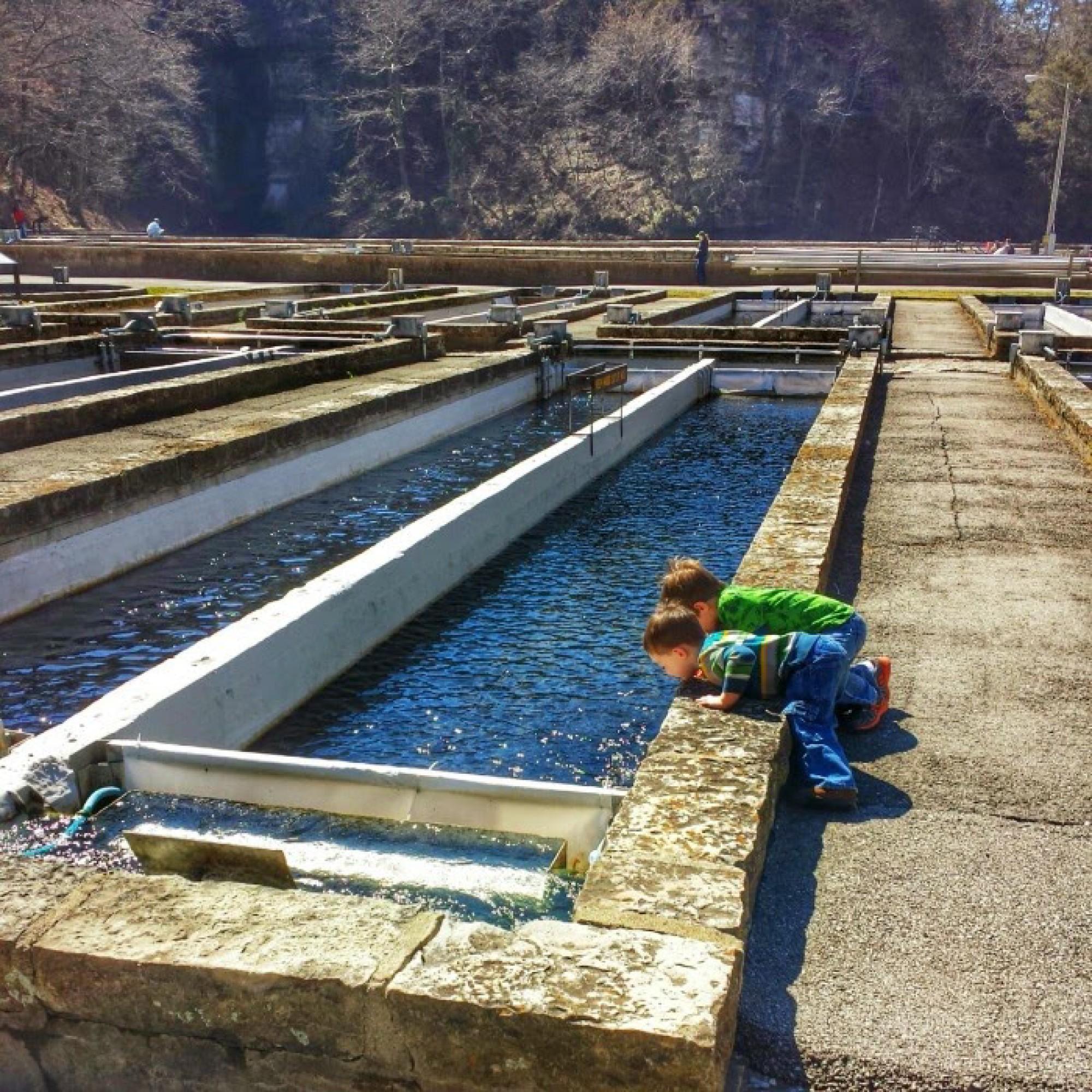 Roaring River Fish Hatchery-2